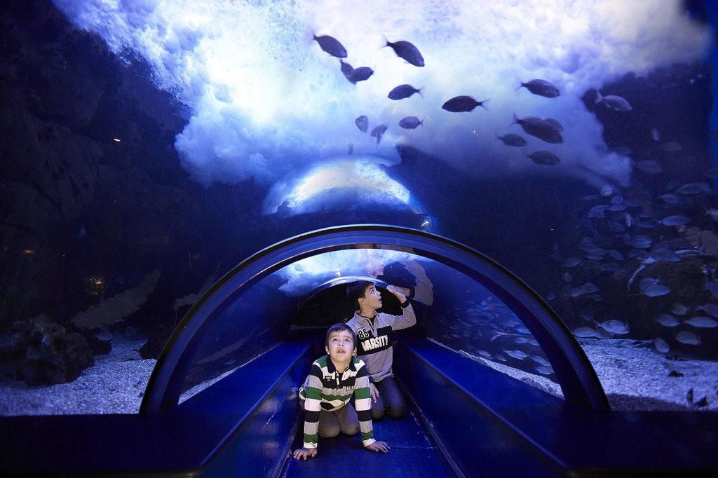 Valencia espa a el oceanogr fic acuario for Acuario valencia precio
