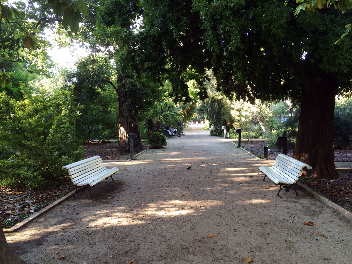Valencia espa a jard n bot nico for Talleres jardin botanico